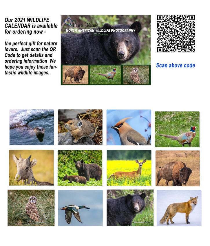 ad_fbook_wildlife