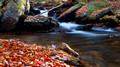 A wash of autumn leaves in a mountain stream, North Carolina