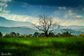 Meadow of Cades Cove
